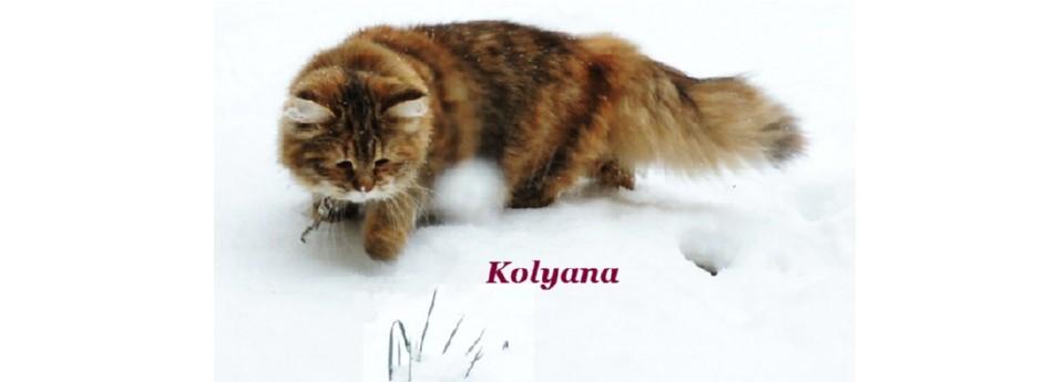 RahuKa - Kolyana